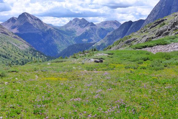 wildflowers near Trinity Lake
